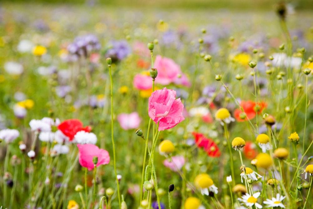 Blumenduft zuhause & jeder Jahreszeit! Seedballs DIY
