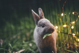 Ostern - so sparst du bei Deko und Geschenken