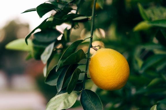 Zehn Anwendungen für Zitronensäure