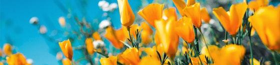 Blumen & Deko