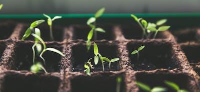50 Ideen für deinen Garten für unter 100€