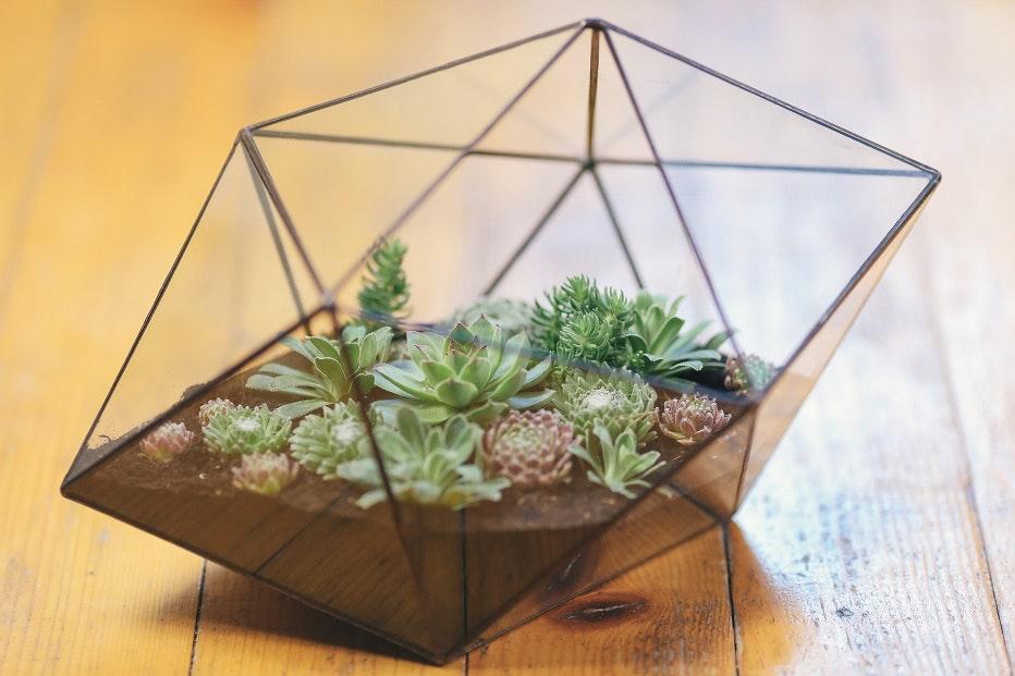 Florarium oder Regenwaldterrarium – selbst bauen!