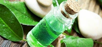 Die zehn besten Anwendungsgebiete für Teebaumöl