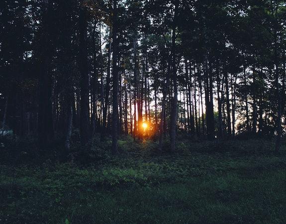 Vitamin D Lampe im Test – Hol dir das Glückshormon ins Haus
